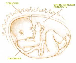 Болят пальцы рук на 35 неделе беременности