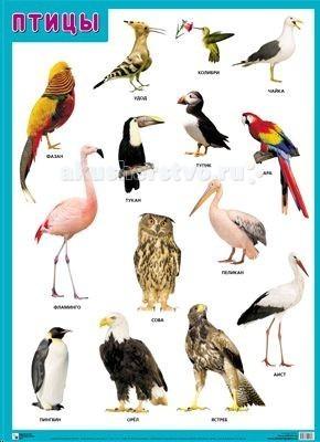 Мозаика-Синтез Обучающий плакат Птицы от Акушерство