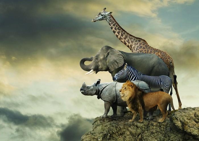 Educa Пазл Животные на краю скалы 500 деталейПазл Животные на краю скалы 500 деталейПазл Животные на краю скалы состоит из 500 деталей.  Размер собранной картинки: 48*34 см.  В комплект входит сухой клей.<br>