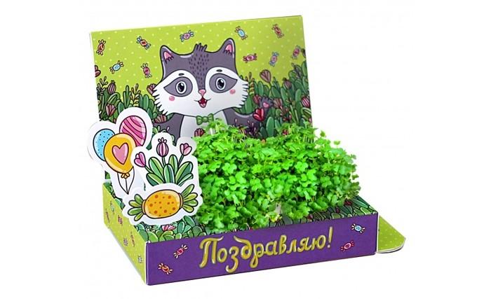 Happy Plant Подарочный набор Живая открытка Поздравляю!