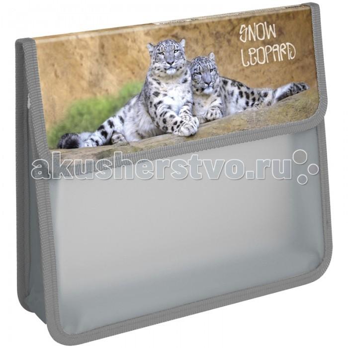 Спейс Папка для тетрадей на липучке 1 отделение А5 Дикие кошки пластик