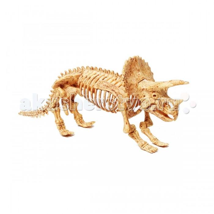 Bondibon Французские опыты Науки с Буки ТрицератопсФранцузские опыты Науки с Буки ТрицератопсФранцузские опыты Науки с Буки Трицератопс.  знавать интересные факты о полезных ископаемых и самому обнаружить динозавра можно в любом возрасте. Даже самые маленькие могут почувствовать себя палеонтологами, изучающими древний мир, с набором для проведения палеонтологических раскопок.   Используя набор настоящих инструментов палеонтолога, ребенок сможет самостоятельно найти скелет самого древнего животного на Земле, очистить его от вековой пыли, а затем собрать реалистичную 3D-модель динозавра!   Даже если с первого раза все получится не идеально, ничего страшного. Подробная инструкция покажет, как собранный скелет можно использовать для повторной игры.<br>