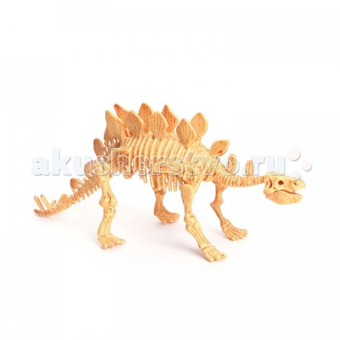 Bondibon Французские опыты Науки с Буки СтегозаврФранцузские опыты Науки с Буки СтегозаврФранцузские опыты Науки с Буки Стегозавр.  Узнавать интересные факты о полезных ископаемых и самому обнаружить динозавра можно в любом возрасте. Даже самые маленькие могут почувствовать себя палеонтологами, изучающими древний мир, с набором для проведения палеонтологических раскопок.   Используя набор настоящих инструментов палеонтолога, ребенок сможет самостоятельно найти скелет самого древнего животного на Земле, очистить его от вековой пыли, а затем собрать реалистичную 3D-модель динозавра!   Даже если с первого раза все получится неидеально, ничего страшного. Подробная инструкция покажет, как собранный скелет можно использовать для повторной игры.<br>