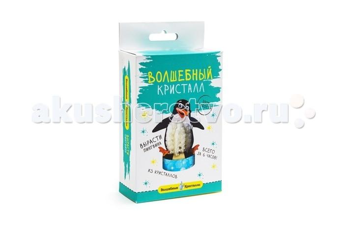 Волшебные кристаллы Набор ПингвинНабор ПингвинВолшебные кристаллы Пингвин это набор для самостоятельного выращивания кристаллов на бумажной основе в форме пингвина.  Набор включает иллюстрированную пошаговую инструкцию. Компоненты набора полностью безопасны для детей старше 12 лет, занимающихся самостоятельно или под присмотром взрослых.  Законченную работу рекомендуется покрыть лаком для предохранения от выцветания или предотвращения нежелательных последствий при контакте с кожей.<br>