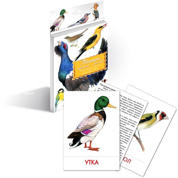 Маленький гений Дидактические карточки Птицы наших лесовДидактические карточки Птицы наших лесовМаленький гений Дидактические карточки Птицы наших лесов. Тематические комплекты дидактических карточек помогут познакомить ребенка с окружающим миром, развить речевые умения, научить сравнивать, классифицировать, обобщать.  Карточки рекомендуются родителям для познавательных игр с детьми и занятий по методике Г. Домана. Могут использоваться в индивидуальной и групповой работе логопедами, психологами, воспитателями детских садов, учителями начальных классов.   В каждом комплекте 16 карточек, каждая из которых содержит интересную познавательную информацию об изображенном на ней предмете.<br>