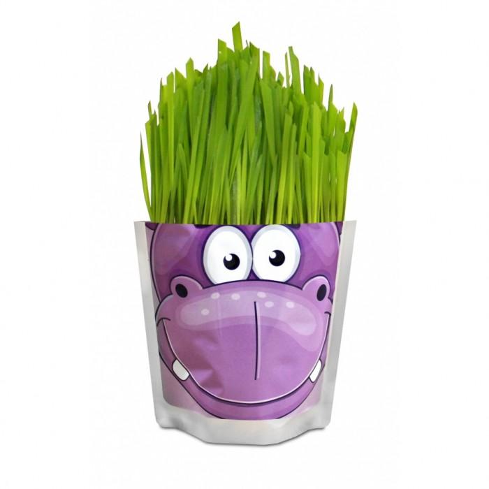 Happy Plant Набор для выращивания БегемотНабор для выращивания БегемотHappy Plant Набор для выращивания Бегемот - это интересный и полезный набор для выращивания позволит взрастить овес.   Особенности: В каждом доме будет не лишним содержать любое растение.  Понравится любителям природы и тем, кто любит ухаживать за растениями. Ребенок воочию увидит принцип взращивания растений, а взрослый, обладая достаточными навыками, сможет применить созревшее растение в пищу. Сама упаковка очень позитивная и забавная.  Этот розовый бегемот настолько полон радости, что сам пакет вот-вот лопнет от позитива.  К набору прилагается инструкция, так что никаких проблем возникнуть не должно. В наборах серии - овес, который вырастает очень быстро, травка получается плотная, густая, зеленая, красивая уже через 3 дня.  Детям очень нравится делать прическу своему зеленому питомцу: травку можно подстригать ножницами, создавать разные формы, можно завязывать резинками хвостики, можно даже заплетать зеленые косички!<br>