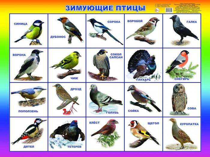 Алфея Плакат Зимующие птицы
