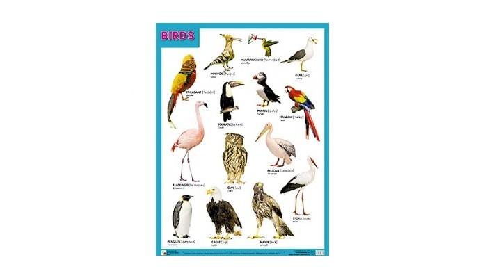 Мозаика-Синтез Плакаты (англ) Birds (Птицы)