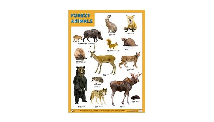 �������-������ ������� (����) Forest Animals (������ ���������)