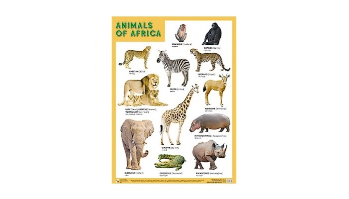 �������-������ ������� (����) Animals of Africa (�������� ������)