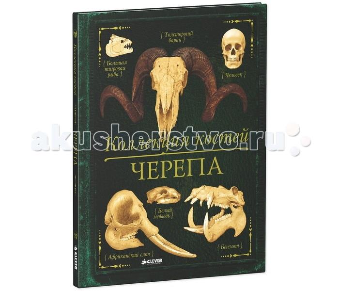 Clever Книга Бедуайер де ла К. Коллекция костей Черепа
