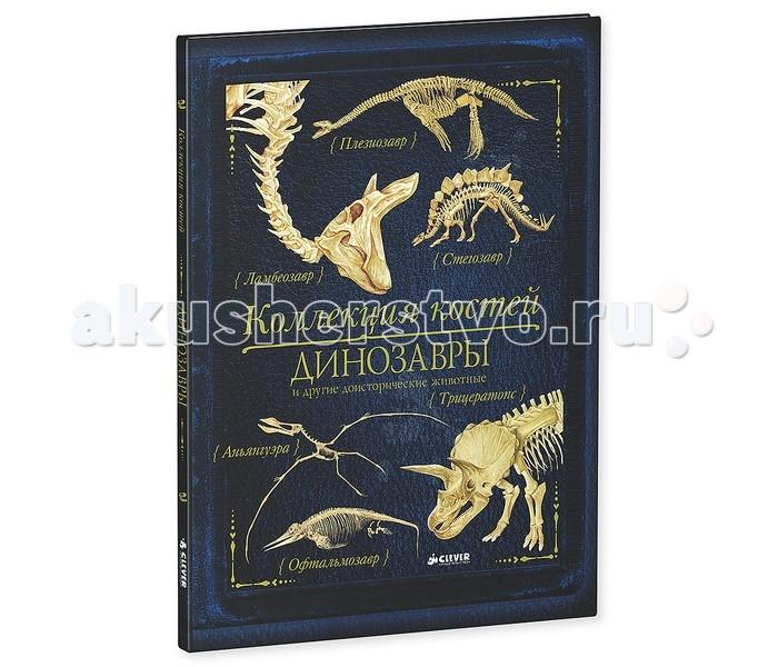 Clever Коллекция костей Динозавры и другие доисторические животныеКоллекция костей Динозавры и другие доисторические животныеClever Коллекция костей Динозавры и другие доисторические животные 978-5-91982-631-6  Что вас ждет под обложкой: Третьей книгой серии «Коллекция костей» стала удивительная и интересная энциклопедия «Коллекция костей. Динозавры и другие доисторические животные». В этой книге вы познакомитесь с коллекцией костей динозавров. Их скелеты приоткроют завесу древних тайн: как жили эти доисторические животные? Чем питались? Как выглядели? Узнай, кто жил до динозавров. Рассмотри огромные зубы гигантозавра. Изучи сложное строение скелета тиранозавра, а еще найди и рассмотри окаменевшую челюсть мегалозавра, познакомься с рогатыми динозаврами и узнай все тайны пситтакозавра!    Гид для родителей:  Фотографии и копии скелетов динозавров, удивительные научные факты, тонко прорисованные и качественные иллюстрации – все это делает новинку «Коллекция костей. Динозавры и другие доисторические животные» интересной и неповторимой книгой. В третьей книге серии «Коллекция костей», адресованной детям в возрасте от 7-13 лет, вы найдет не только фотографии и рисунки костей динозавров, но и увлекательные информационные блоки, схемы и рисунки, занимательные факты, которые будут интересны и детям, и родителям и даже учителям! И еще одно преимущество – книга стилизована под старинное издание и станет прекрасным подарком для любопытных школьников.    Изюминки книжки:  • Более 50-ти животных на страницах атласа – великолепное подарочное издание для детей от 7 лет.  • Отличное качество полиграфии, твердая обложка и плотные страницы. • Натуралистичные иллюстрации.  • Из каждого разворота можно узнать: строение динозавров (названия и расположение костей), места обитания, размер животного, повадки и множество других интересных фактов!  • Удобный алфавитный указатель в конце атласа.<br>