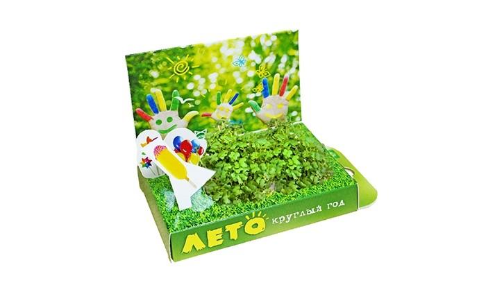 Happy Plant Подарочный набор Живая открытка Лето круглый год