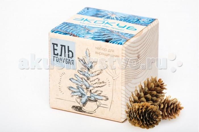 Экокуб Набор для выращивания Голубая ельНабор для выращивания Голубая ельЭкокуб Набор для выращивания Голубая ель ECB-01-01  Набор Экокуб — удивительная вещь, которая станет необычным украшением дома или оригинальным подарком.  С виду это лишь маленький деревянный куб, но все не так просто. На самом деле это экологически чистый кубический «горшок» из натуральной древесины, внутри которого спрятано настоящее деревце!  В этом стильном горшочке ожидают своего часа семена красивейшей Голубой ели.  У Голубой ели потрясающий синий окрас хвои и крона в форме конуса. Она неприхотлива к освещенности и легко переносит морозы до -35° С.  Эта красавица не боится загрязненного воздуха - подросшее дерево можно посадить у дороги и не бояться, что оно зачахнет. Ее крону также можно обрезать и придавать желаемую форму.  Экокуб позволит вырастить редкое хвойное дерево в любое время года, в квартире и офисе.  Посадив маленькое семечко, вы сделаете свою жизнь немного лучше  В большом городе у человека так мало возможностей пообщаться с живой природой, и очень редко получается выбраться из четырех стен, ведь всегда находятся дела поважнее. Однако для поддержания внутренней гармонии и позитивной энергии поддерживать связь с природой просто необходимо.  С набором Эко-куб кусочком леса можно легко обзавестись в собственной квартире! Вместо того чтобы равнодушно поставить на подоконник магазинную фиалку или фикус, вы сможете самостоятельно вырастить «зеленого» друга и искренне к нему привязаться.  Экокуб – это самый легкий способ вырастить растение, о котором вы когда-либо слышали  Благодаря этому оригинальному кубу-горшочку, вы легко с этим справитесь, даже если не имеете ни знаний, ни опыта в садоводстве. Вам не помешает отсутствие специальных инструментов и дачного участка, ведь в экокубе уже есть все необходимое для того, чтобы из него без особых усилий появилось растение. От вас потребуется лишь желание и чуточку заботы. Инструкция, написана так подробно и понятно, что вы не сможете ош
