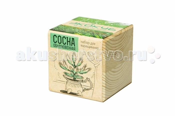 Экокуб Набор для выращивания Сосна