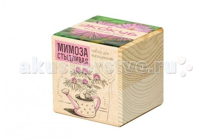 Экокуб Набор для выращивания Мимоза