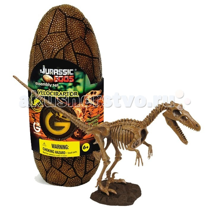 Конструктор Geoworld Сборная модель динозавра в яйце Jurassic eggs - Велоцираптор 15 деталейСборная модель динозавра в яйце Jurassic eggs - Велоцираптор 15 деталейВелоцираптор — относительно маленький, юркий и хитрый ящер, который обитал в конце мелового периода. Он обладал рядом прогрессивных анатомических черт и очень близок к древним птицам. Некоторые современные теории палеонтологии настаивают, что велоцирапторы были полностью оперены и обладали теплокровностью. Точную музейную копию скелета велоцираптора юный палеонтолог сможет собрать своими руками. Детали предварительно раскрашены, чтобы быть похожими на настоящие кости. Они заключены в стилизованное яйцо. Скелет оснащен подставкой, так что он может стать потом оригинальным сувениром, украшением вашего дома.  Основные характеристики:  Размер коробки: 7.5 х 19.5 х 7 см Длина собранной модели: 28 см Количество деталей: 15 шт.<br>