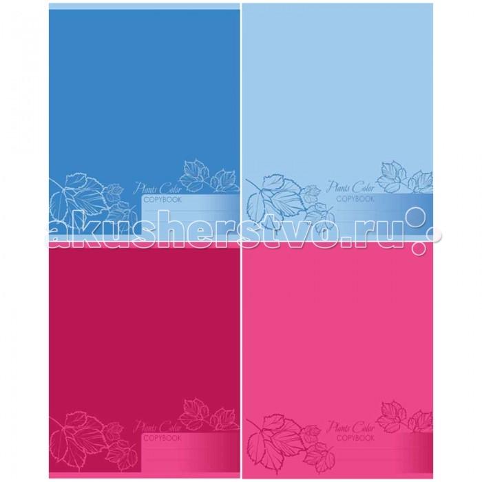 БиДжи Тетрадь Mono Color А5 (48 листов) от Акушерство