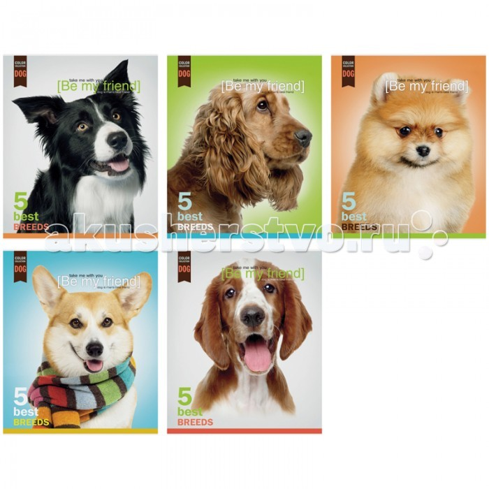����� ������� �5 ������ ������� Dog collection (40 ������)