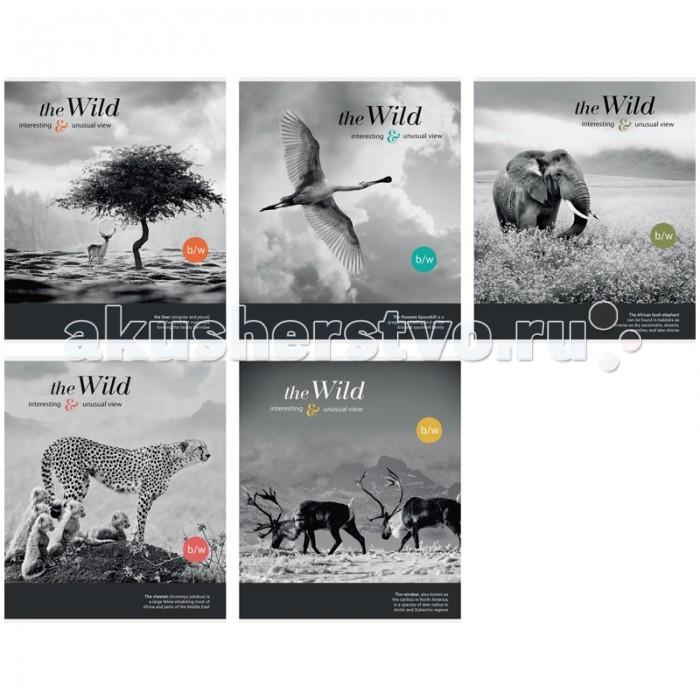 Спейс Тетрадь А5 клетка Животные The Wild Unusual view металлизированный картон (48 листов)