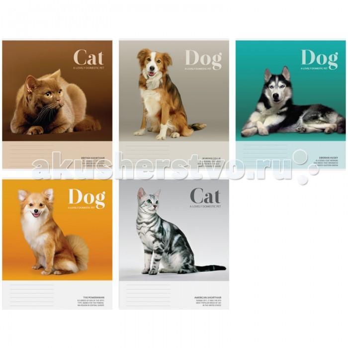 Спейс Тетрадь А5 клетка Питомцы Cat/Dog (48 листов)