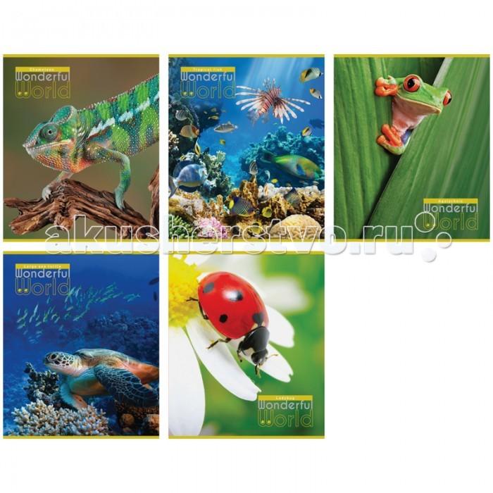 Спейс Тетрадь А5 клетка Природа Wonderful world эконом (48 листов)