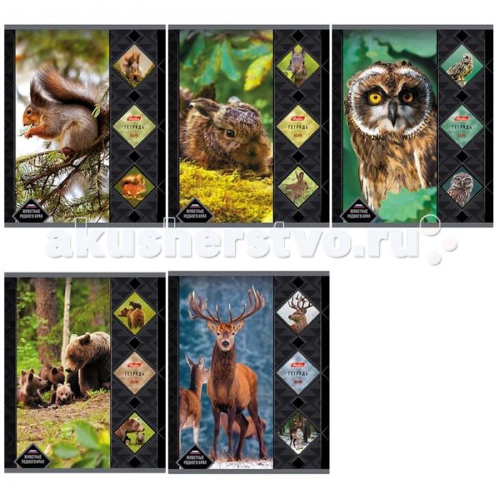 Hatber Тетрадь Животные Родного Края А5 (48 листов)