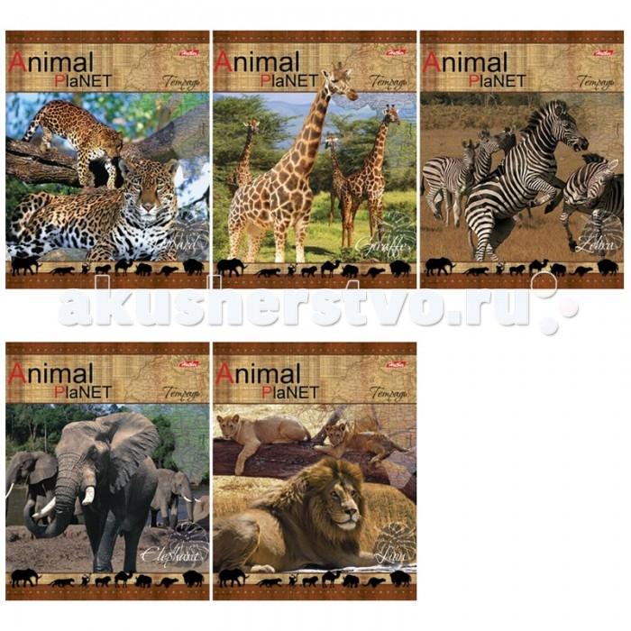 Hatber Тетрадь Animal Planet А5 (48 листов)