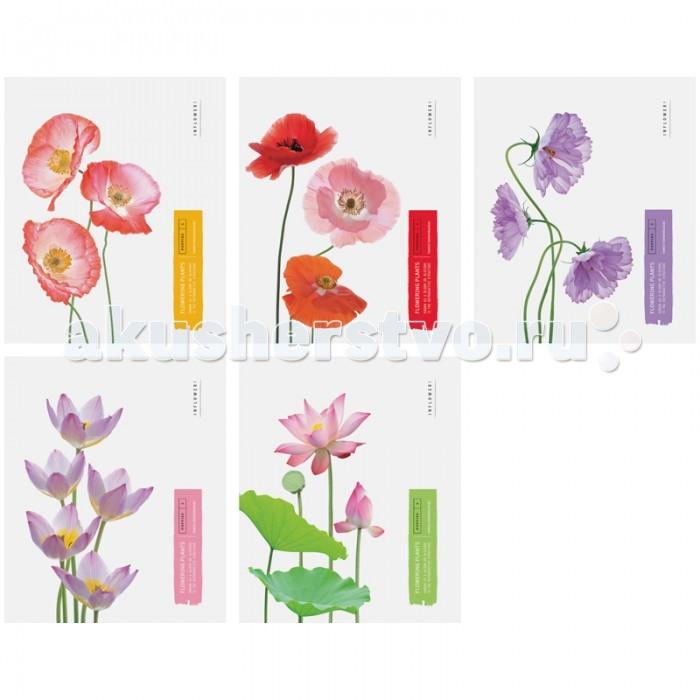 Спейс Тетрадь А5 клетка Цветы Flowering plants ТВИН-лак (48 листов) Тетрадь А5 клетка Цветы Flowering plants ТВИН-лак (48 листов) Т48кТЛ_5272