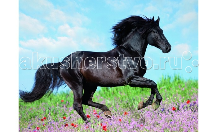 Ravensburger Пазл Прекрасная лошадь XXL 200 элементовПазл Прекрасная лошадь XXL 200 элементовRavensburger Пазл Прекрасная лошадь XXL 200 элементов 12803  Пазл XXL Прекрасная лошадь создан для всех любителей лошадей. Изображенная на пазле лошадь с черной гривой и лоснящимся хвостом полна сил и энергии.  В готовом виде пазл можно проклеить специальным клеем, который приобретается отдельно, и поместить в большую красивую рамку. После этого фотографию можно повесить в доме на самом видном месте. Собранный пазл будет не только приятным дополнением декора, но также и поводом для гордости того, кто потратил время на кропотливую работу.  Размер собранного пазла: 49 x 36 см.<br>