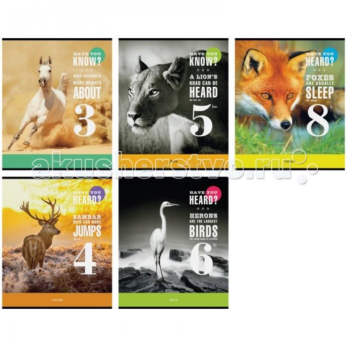 Спейс Тетрадь А5 линия Животные Have you? (48 листов)