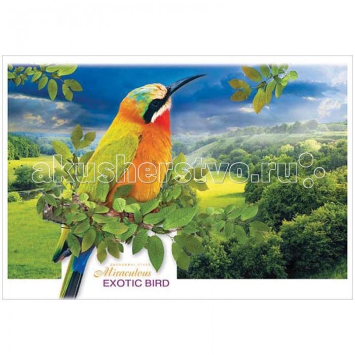 Спейс Альбом для рисования Животные.Тропические птицы 8 листов
