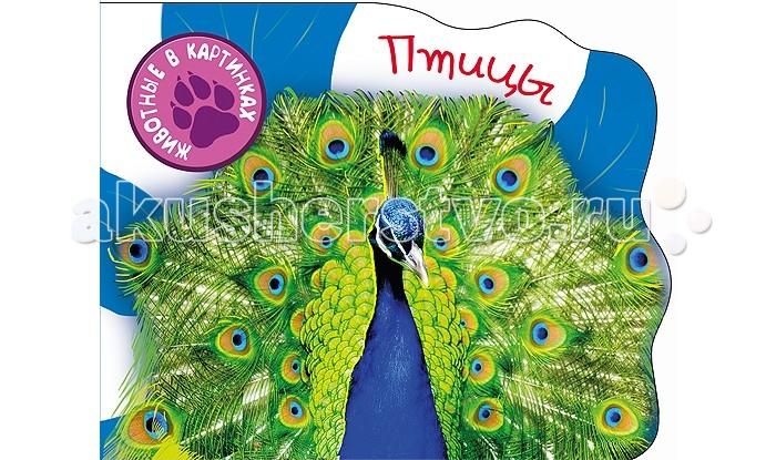 Проф-Пресс Книжка-картонка Вырубки А5 Птицы