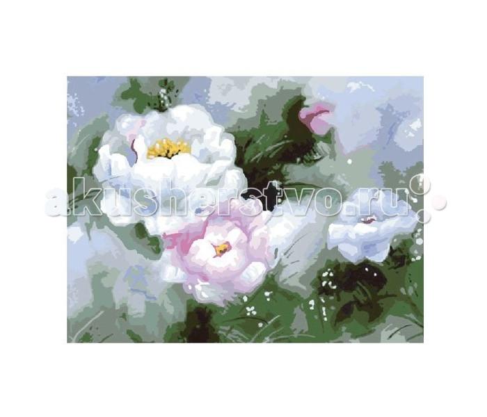 Molly Картина по номерам Белые пионы