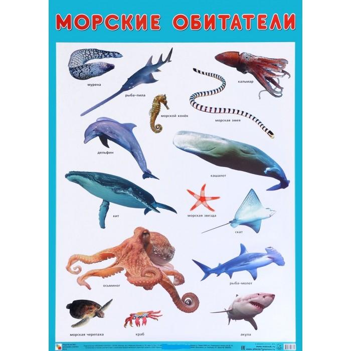 Мозаика-Синтез Плакат Морские обитателиПлакат Морские обитателиПлакат большого формата Морские обитатели познакомит детей с представителями морских глубин: акулой, скатом, кальмаром, осьминогом, морской черепахой и многими другими. Четкие, яркие фотографии обязательно заинтересуют ребят и помогут усвоить новые знания.  Наглядный материал может быть использован на занятиях по ознакомлению с окружающим миром, для развития речи и мышления.  Размер плаката: 50 х 70 см<br>