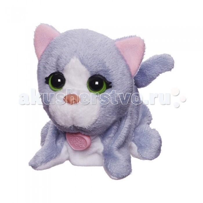 Интерактивная игрушка FurRealFriends Поющая кошечка