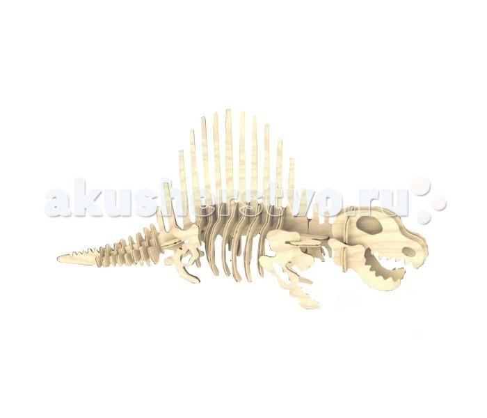 Конструктор МДИ ДиметеродонДиметеродонМДИ Диметеродон Ж012                       Игрушка сделана в виде скелета исчезнувшего динозавра и может быть очень интересна для детей увлекающихся животными. Модель сделана из натурального дерева, с учетом возможности раскрашивания. Предназначена для развития логики. Легко собирается. Для того чтобы, она долго служила, рекомендуется при сборке склеивать детали.<br>