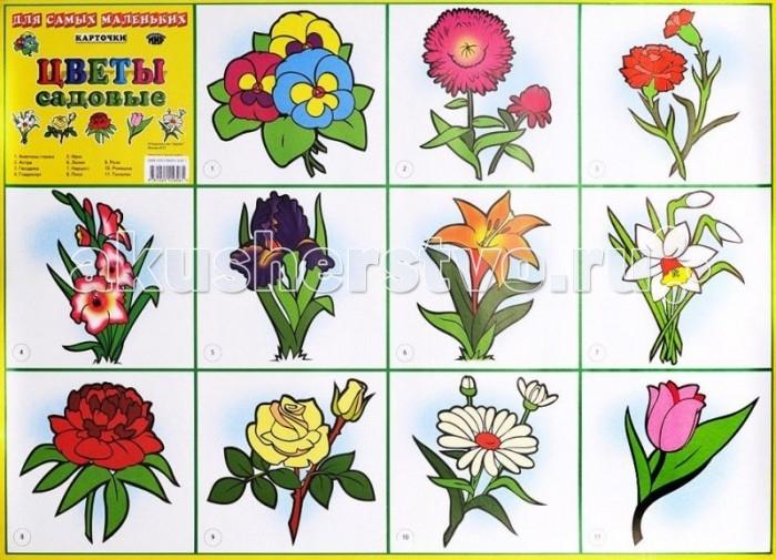 ДетИздат Плакат Для самых маленьких Цветы садовые