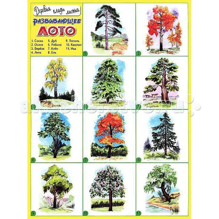 ДетИздат Развивающее лото Деревья плоды листья