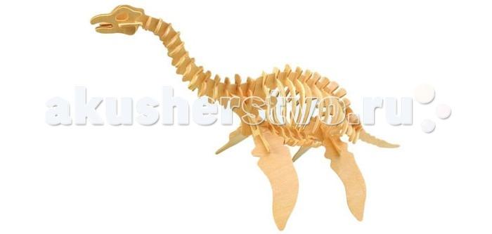 Конструктор Wooden Toys Сборная модель ПлезиозаврСборная модель ПлезиозаврПлезиозавр это сборная деревянная игрушка - объемная модель настоящего древнего динозавра, обитавших в соленых водоемах, а для дыхания выныривавших на поверхность.  Все вырубные детали располагаются на фанерной доске. Для сборки модели их необходимо предварительно выдавить с места расположения и собирать в последовательности, указанной в прилагаемой инструкции.  Для того чтобы собранная модель служила долго, можно проклеить места соединения деталей при сборке.   При желании собранную модель можно раскрасить, используя любые типы краски. Производитель рекомендует темперные краски. После раскрашивания модель можно покрыть лаком.  В процессе сборки модели ребенок развивает усидчивость, пространственное и абстрактное мышление.   Все детали сборной модели изготовлены из экологически чистой древесины.  Комплектация:  4 фанерных пластины с деталями и инструкция по сборке.<br>