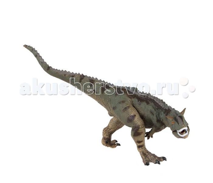 Dinosaur Family Динозавр КарнотаврДинозавр КарнотаврDinosaur Family Динозавр Карнотавр входит в группу динозавров, называемых карнозаврами. В эту же группу входят самые знаменитые и кровожадные хищные ящеры (тиранозавр, тарбозавр, аллозавр и др).   У всех карнозавров огромная голова и коротенькие передние конечности. Но карнотавр имеет некоторые отличительные особенности. Среди сородичей его выделяют рожки, находившиеся над глазами. Карнотавр весил как автомобиль и был ростом как слон. Он бегал на двух ногах. При движении, длинный и мускулистый хвост помогал карнотавру сохранять равновесие. Хвост служил противовесом массивной голове. Благодаря этому он мог вытягивать шею вперед, не опасаясь упасть  Реалистичная фигурка изготовлена из высококачественного пластика.   Размер: 14 х 12 см<br>