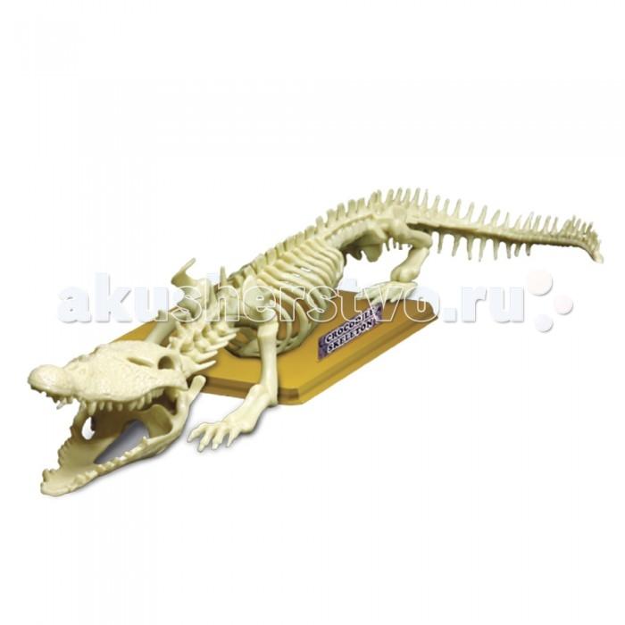 Конструктор Eastcolight Сборная модель Science Time - Скелет крокодила 15 элементовСборная модель Science Time - Скелет крокодила 15 элементовEastcolight Сборная модель Science Time - Скелет крокодила  Сборная модель Скелет крокодила из серии Science Time - необычный и познавательный конструктор, который понравится мальчикам и девочкам. Ребенок сможет собственными руками собрать скелет крокодила, а также изучать анатомию этого животного. Все детали этого конструктора сделаны качественно, собирать их будет одно удовольствие.   Возраст: от 8 лет Комплект: 15 костей, подставка с табличкой и этикеткой на русском языке, шпилька для установки скелета.<br>