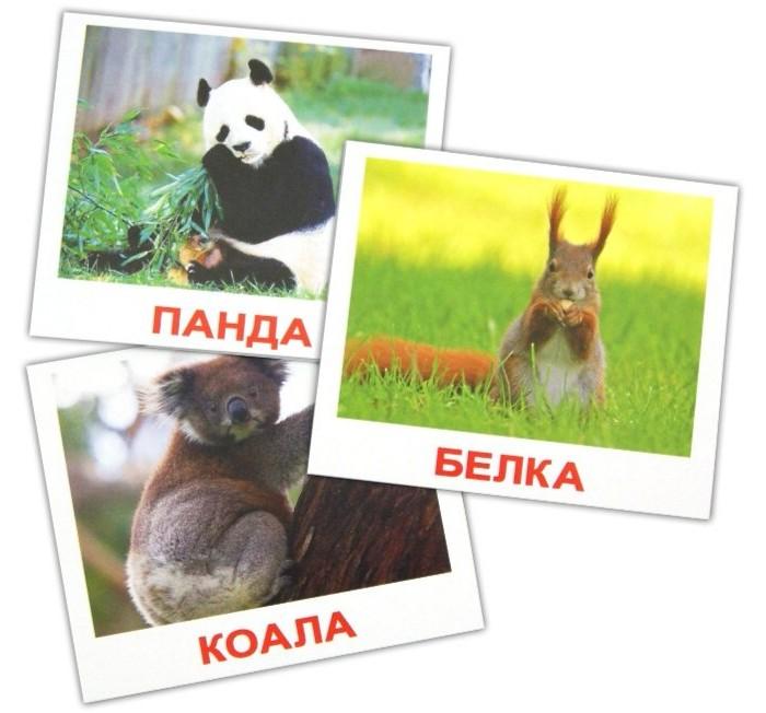 Вундеркинд с пелёнок Набор обучающих карточек Мини-Дикие животные 40 шт.