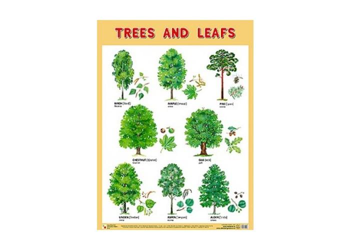 Мозаика-Синтез Обучающий плакат на английском языке Trees and Leafs Деревья и листья