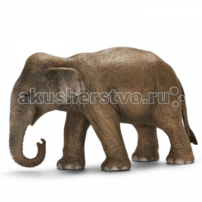 Schleich Игровая фигурка Азиатский слон самкаИгровая фигурка Азиатский слон самкаАзиатский слон, самка – животные, которые прекрасно приручаются, их часто используют в качестве рабочей силы. Азиатские слоны живут в семейных группах, которые составляют от двух до десяти слонов. Считается, что слоны способны сопереживать своим соплеменникам, хранить воспоминания о том, когда бывает засуха, или о том, где расположено хорошее пастбище.   Фигурки Schleich выполнены из каучукового пластика с максимальной точностью, каждая фигурка раскрашивается вручную. Игрушки Schleich не вызывают аллергии.<br>