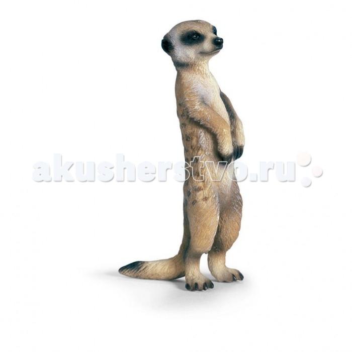 Schleich Игровая фигурка СурикатИгровая фигурка СурикатСурикаты – очень организованные животные, которые живут колониями в глубоких норах, питаясь, в основном, луковицами растений, корнями и насекомыми. Обитают эти зверьки в землях Южной Африки.  Компания Schleich поплнила свою коллекцию фигуркой суриката, вставшего на задние лапки и вытянувшегося во весь рост. Данная поза является у них любимой. Так сурикаты выясняют, не грозит ли им опасность, отчего за подобную бдительность получили прозвище часовые пустынь.  Внешний вид у игрушки, детально походящий на оригинал, не может не вызвать улыбку умиления. Малыш вряд ли откажется от скрупулезного изучений фигурки, скорее всего, она станет с интересом ее рассматривать, ведь такую зверюшку очень редко можно увидеть вживую. Игрушка изготовлена из пластмассы, а также раскрашена вручную.  Великолепно выполненные и раскрашенные вручную животные, созданные при тесном сотрудничестве с Берлинским зоопарком,  никого не оставят равнодушными.  В разработке каждой фигурки компания Schleich  опирается на исследования в области педагогики, создавая маленькие шедевры для маленьких ручек.  Основные характеристики:  Размер фигурки: 1,7 x 2,5 x 5,7 см<br>