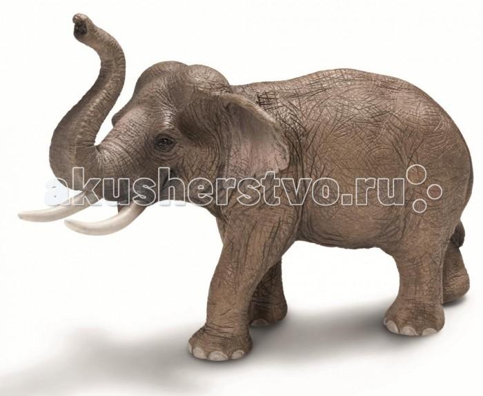 Schleich Игровая фигурка Азиат Животные из зоопаркаИгровая фигурка Азиат Животные из зоопаркаАзиатский слон, самец – животное, которое прекрасно приручается, слонов часто используют в качестве рабочей силы. Азиатские слоны живут в семейных группах, которые составляют от двух до десяти слонов. Считается, что слоны способны сопереживать своим соплеменникам, хранить воспоминания о том, когда бывает засуха, или о том, где расположено хорошее пастбище.   Фигурки Schleich выполнены из каучукового пластика с максимальной точностью, каждая фигурка раскрашивается вручную. Игрушки Schleich не вызывают аллергии.<br>