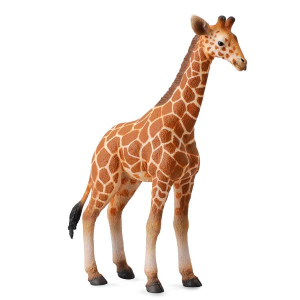 Gulliver Collecta Фигурка Жеребенок сетчатого жирафа 12 смCollecta Фигурка Жеребенок сетчатого жирафа 12 смGulliver Collecta Фигурка Жеребенок сетчатого жирафа является уменьшенной копией настоящего жеребенка сетчатого жирафа. Кажется, что игрушка вот - вот оживет.  Особенности: Все детали тщательно проработаны, что способствует развитию воображения и тактильных ощущений у ребёнка во время игры. Декоративная фигурка станет изысканным и уникальным сувениром, и понравится как детям, так и их родителям. Фигурка изготовлена из высококачественной пластмассы и раскрашены вручную.  Размеры: 9 x 3 x 12 см<br>