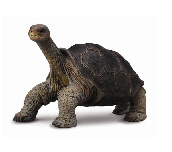 Gulliver Collecta Фигурка Абингдонская слоновая черепахаCollecta Фигурка Абингдонская слоновая черепахаGulliver Collecta Фигурка Абингдонская слоновая черепаха является уменьшенной копией настоящей черепахи. Кажется, что игрушка вот - вот оживет.  Особенности: Все детали тщательно проработаны, что способствует развитию воображения и тактильных ощущений у ребёнка во время игры. Декоративная фигурка станет изысканным и уникальным сувениром, и понравится как детям, так и их родителям. Фигурка изготовлена из высококачественной пластмассы и раскрашены вручную.  Размеры: 15 х 9 см<br>