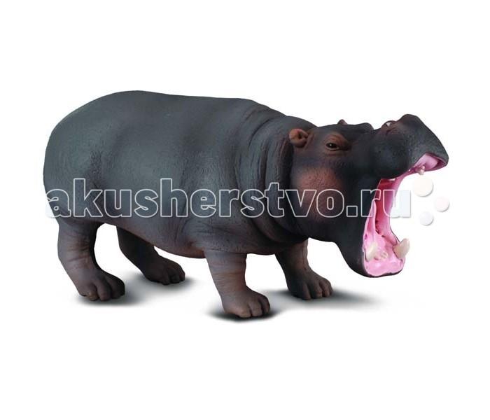 Gulliver Collecta Фигурка Гиппопотам 13 смCollecta Фигурка Гиппопотам 13 смGulliver Collecta Фигурка Гиппопотам является уменьшенной копией настоящего гиппопотама. Кажется, что игрушка вот - вот оживет.  Особенности: Гиппопотам - это крупное млекопитающее травоядное животное. Не смотря на свой крупный размер и вес, гиппопотам может развивать скорость до человеческого бега, в воде он может «тонуть» словно камень, а потом быстро всплывать. Когда же гиппопотам всплывает, то над поверхностью появляются вначале маленькие ушки, потом ноздри и глаза. Все детали тщательно проработаны, что способствует развитию воображения и тактильных ощущений у ребёнка во время игры. Декоративная фигурка станет изысканным и уникальным сувениром, и понравится как детям, так и их родителям. Фигурка изготовлена из высококачественной пластмассы и раскрашены вручную.<br>